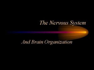The Nervous System And Brain Organization Central Nervous
