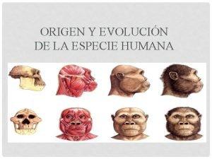 ORIGEN Y EVOLUCIN DE LA ESPECIE HUMANA Evolucin