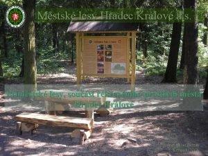 Mstsk lesy Hradec Krlov a s Pmstsk lesy