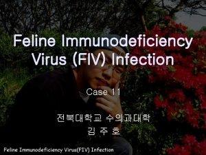 Feline Immunodeficiency Virus FIV Infection Case 11 General