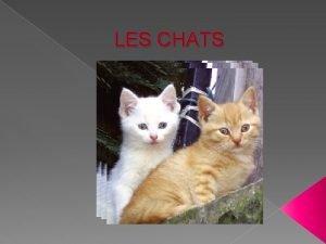 LES CHATS Sommaire 1 le chat et lhomme