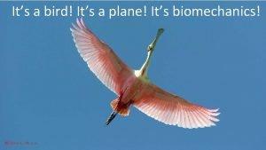Its a bird Its a plane Its biomechanics