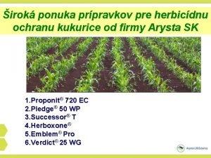 irok ponuka prpravkov pre herbicdnu ochranu kukurice od