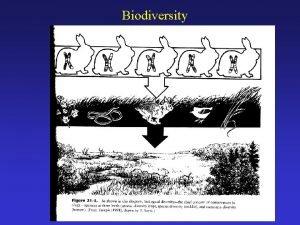 Biodiversity Why is Biodiversity Important Genetic diversity Why
