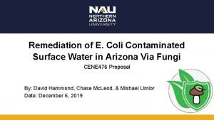 Remediation of E Coli Contaminated Surface Water in