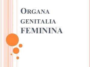 ORGANA GENITALIA FEMININA ENSK POHLAVN ORGNY Vntorn pohlavn