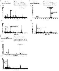 A Expected masses Intact peptide 1156 63 Da