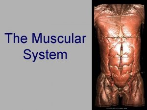 The Muscular System 3 Types of Muscle Tissue