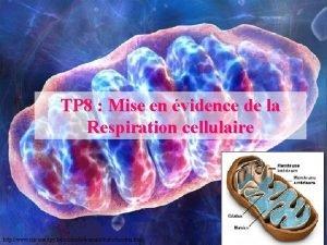 TP 8 Mise en vidence de la Respiration