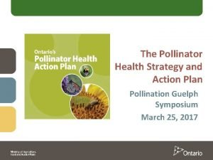 The Pollinator Health Strategy and Action Plan Pollination