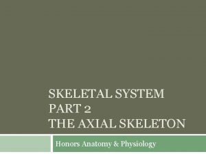 SKELETAL SYSTEM PART 2 THE AXIAL SKELETON Honors