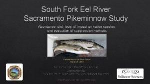 South Fork Eel River Sacramento Pikeminnow Study Abundance