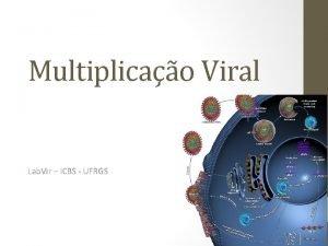Multiplicao Viral Lab Vir ICBS UFRGS Multiplicao dos