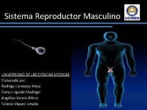 Sistema Reproductor Masculino UNIVERSIDAD DE LAS CIENCIAS MEDICAS