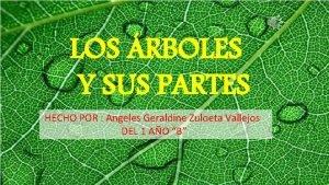 LOS RBOLES Y SUS PARTES HECHO POR Angeles