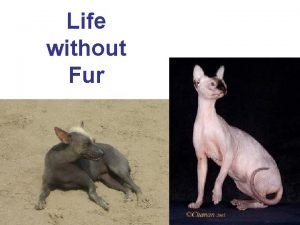 Life without Fur Life without FUR evolutionary reconstruction