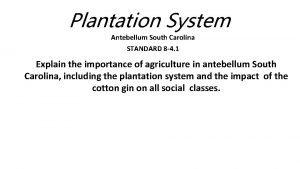 Plantation System Antebellum South Carolina STANDARD 8 4