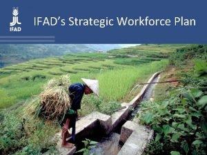 IFADs Strategic Workforce Plan The SWP in IFADs