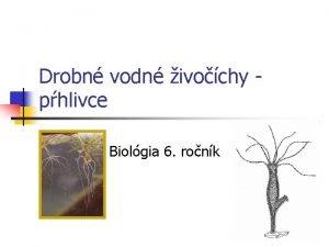 Drobn vodn ivochy phlivce Biolgia 6 ronk Nezmar