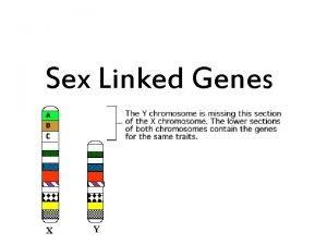 Sex Linked Genes Sex Linked Genes Found on
