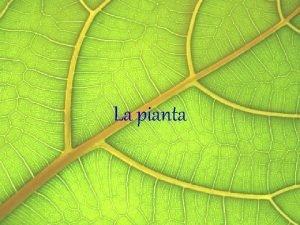 La pianta La pianta un organismo capace di