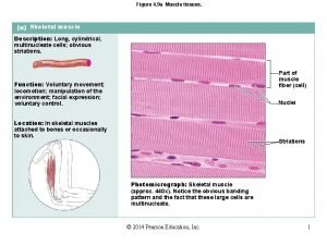 Figure 4 9 a Muscle tissues Skeletal muscle