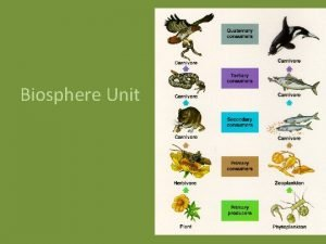 Biosphere Unit Ecology Ecology is the study of