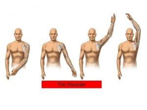 The Shoulder Introduction Components of the shoulder Most