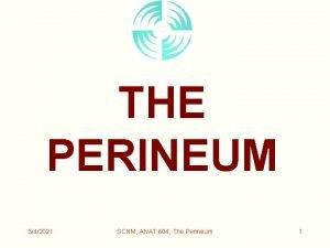 THE PERINEUM 342021 SCNM ANAT 604 The Perineum