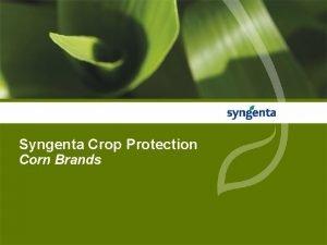 Syngenta Crop Protection Corn Brands Chloroacetamide Corn Herbicides