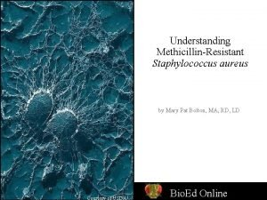 Understanding MethicillinResistant Staphylococcus aureus by Mary Pat Bolton