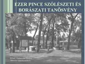 EZER PINCE SZLSZETI S BORSZATI TANSVNY Elad Kaltenecker