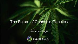 The Future of Cannabis Genetics Jonathan Page Cannabis