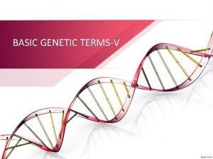 BASIC GENETIC TERMSV Inheritance Genetics Johann Gregor Mendel