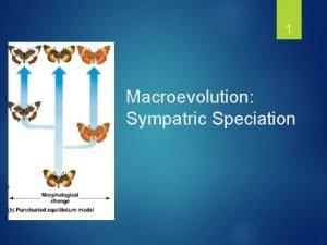 1 Macroevolution Sympatric Speciation Types of Speciation A