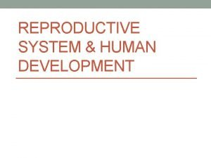 REPRODUCTIVE SYSTEM HUMAN DEVELOPMENT Male Reproductive System What