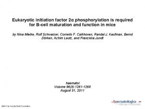Eukaryotic initiation factor 2 phosphorylation is required for