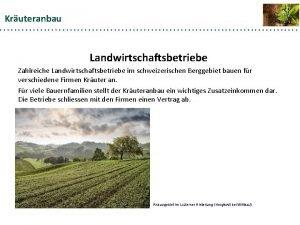 Kruteranbau Landwirtschaftsbetriebe Zahlreiche Landwirtschaftsbetriebe im schweizerischen Berggebiet bauen