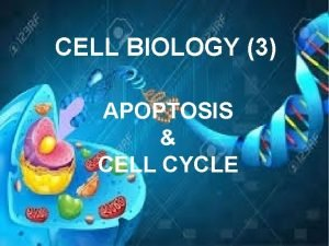 CELL BIOLOGY 3 APOPTOSIS CELL CYCLE APOPTOSIS Definition