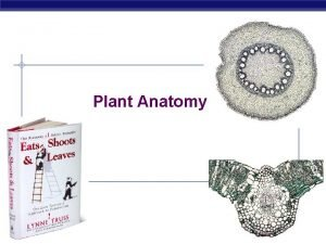 Plant Anatomy AP Biology 2006 2007 Plant TISSUES