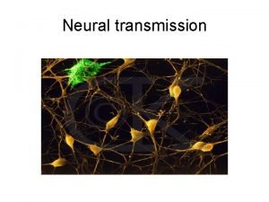 Neural transmission The Reticular theory vs the Synaptic
