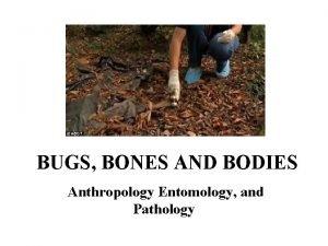 BUGS BONES AND BODIES Anthropology Entomology and Pathology