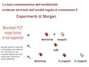 Le basi cromosomiche dellereditariet evidenze derivanti dalleredit legata