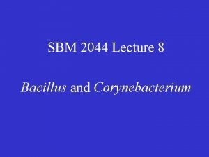 SBM 2044 Lecture 8 Bacillus and Corynebacterium Bacillus