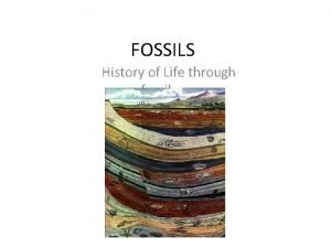 FOSSILS History of Life through fossils 1650 it