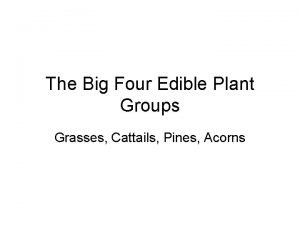 The Big Four Edible Plant Groups Grasses Cattails