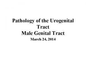 Pathology of the Urogenital Tract Male Genital Tract