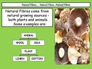 Natural Fibres Natural Fibres come from natural growing