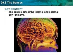 29 3 The Senses KEY CONCEPT The senses