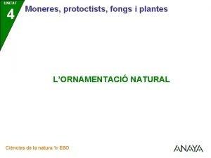 UNITAT 4 Moneres protoctists fongs i plantes LORNAMENTACI